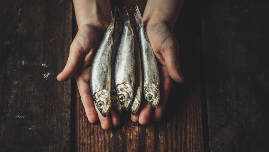 Comment conserver des sardines fraîches - Astuces du 19ème siècle   Astuce Maison