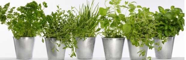 Comment sécher et conserver les plantes aromatiques