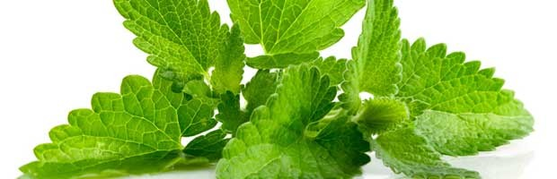 astuce de jardinage : comment bien cultiver la menthe