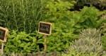 Astuces pour multiplier les herbes aromatiques