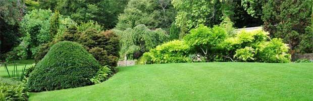La cendre de bois : un engrais naturel pour pelouse