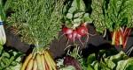 Recettes anti-gaspillage pour les légumes