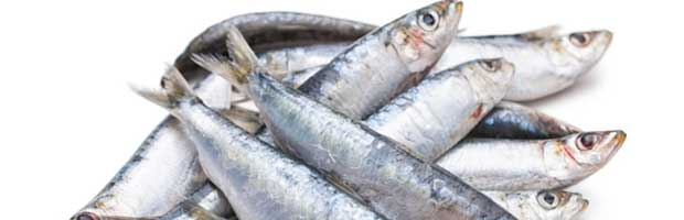 Comment conserver des sardines fra ches astuces du 19 me - Comment conserver des courgettes du jardin ...