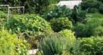 Comment fertiliser la terre naturellement
