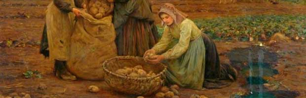 Méthodes d'autrefois pour multiplier les pommes de terre