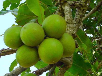 Le beurre de karit pour tous les soins de beaut - Beurre de karite utilisation ...