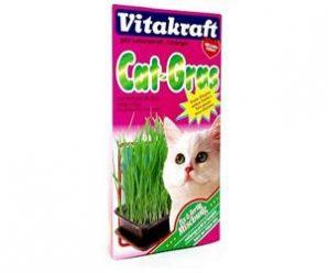 Testez gratuitement l'herbe à chat Cat-Gras