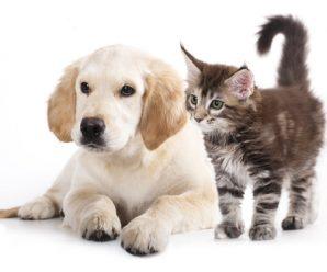 3 astuces pour réduire les frais quand on a des animaux de compagnie