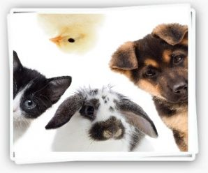 Recevez gratuitement un sticker Animal à bord