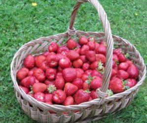 Recevez gratuitement un échantillon de 2kg de fraises