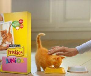 Recevez gratuitement un échantillon de Friskies Junior pour chat
