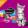 Testez gratuitement le repas Marmiton de Whiskas pour vos chats