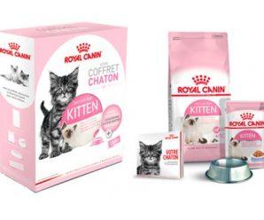 Testez gratuitement le coffret chaton de Royal Canin
