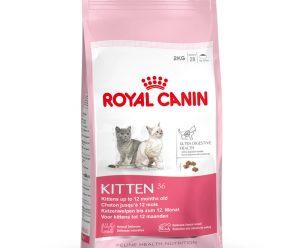 Testez gratuitement les croquettes pour chat de Royal Canin
