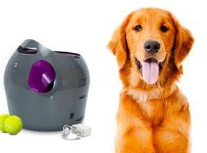 Testez gratuitement le lanceur de balles automatique pour chien